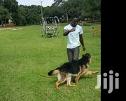 Mobile Vet And Dog Training Services | Pet Services for sale in Central Region, Kampala