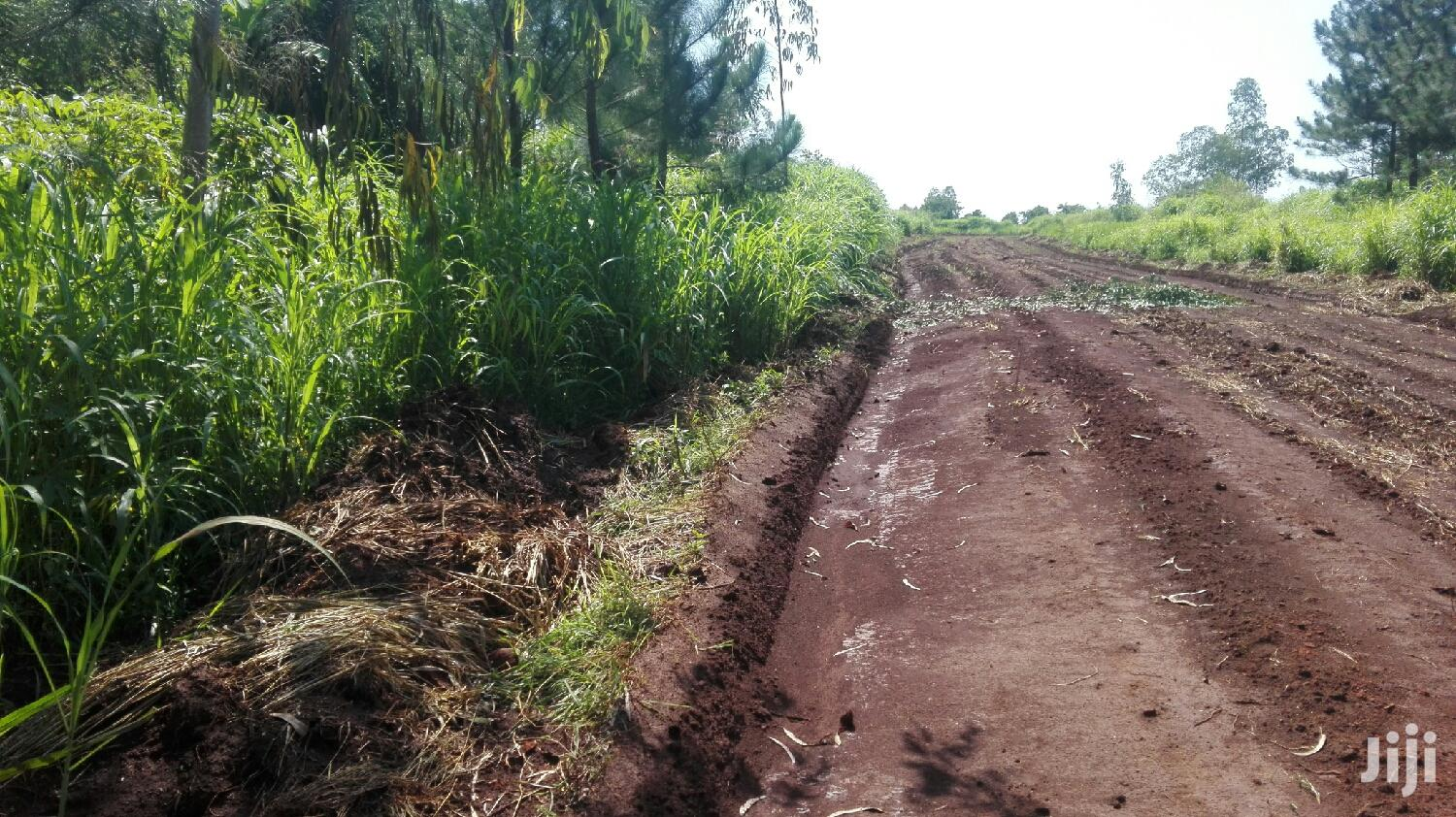 Land for Sale in Laroo
