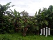 4acres Of Banana Plantations On Sale In Bombo Kalule   Land & Plots For Sale for sale in Central Region, Kampala