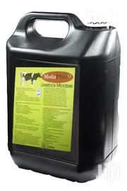 Molaplus Livestock Microbes | Feeds, Supplements & Seeds for sale in Central Region, Kampala