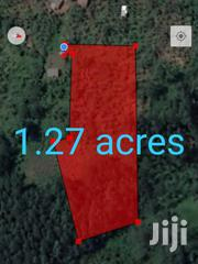 1.27acre Land on Sale | Land & Plots For Sale for sale in Western Region, Kabalore