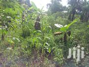 Half Hectare For Sale | Land & Plots For Sale for sale in Central Region, Luweero