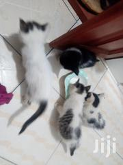 Baby Male Mixed Breed | Cats & Kittens for sale in Central Region, Kampala
