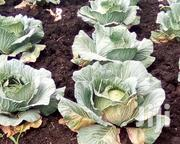 Cabbages For Sell   Meals & Drinks for sale in Eastern Region, Jinja